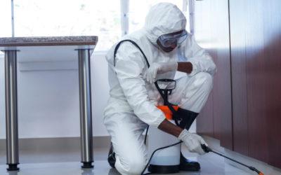 ¿Sabes cuáles son las plagas más habituales en edificios?
